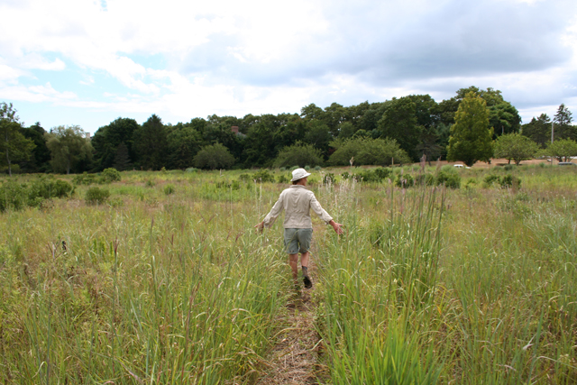meadows lawn alternatives