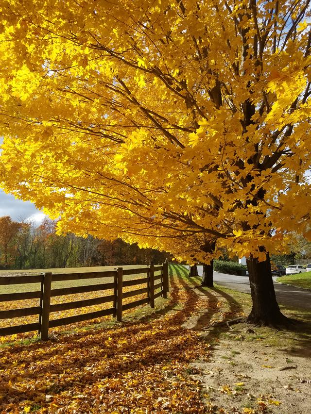 North Fork fall foliage