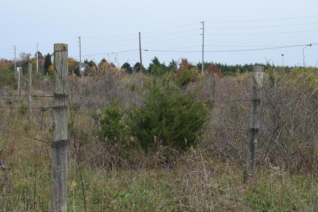 Abandoned vineyard