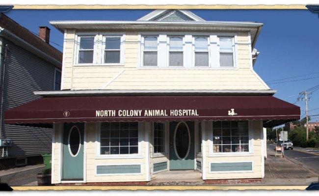 North Haven Animal Hospital Tour