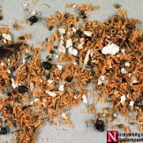 Carpenter Ant Control - Carpenter Ant Debris