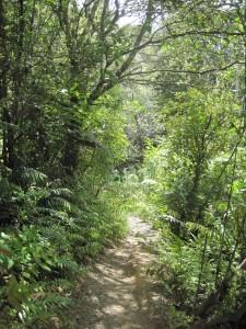 Typical trail through regenerating native bush
