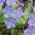 Great Plants for a Shady Spring Border