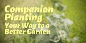 Companion Planting_St Joseph Center