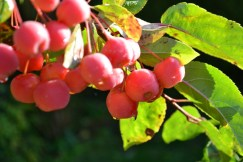 Berries Natural Patterns
