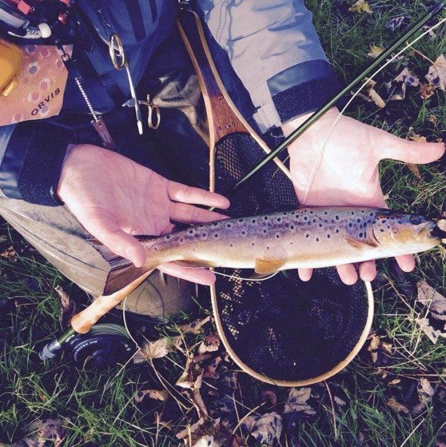 A beautiful wild brown trout from the River Wharfe, West Yorkshire