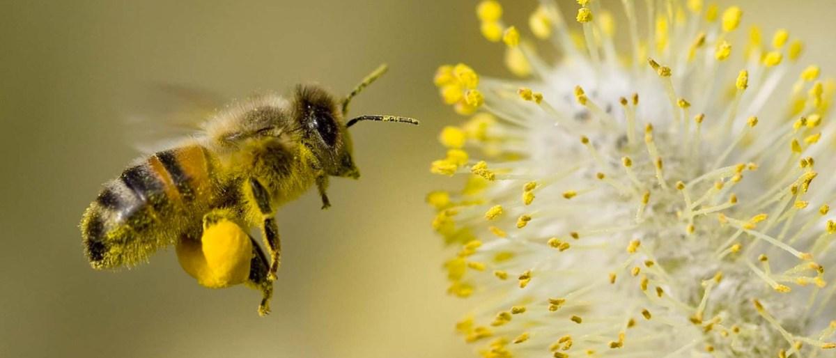 Permalink to: North Okanagan Beekeepers