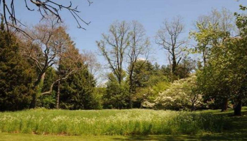 Preserve the Macy Meadow