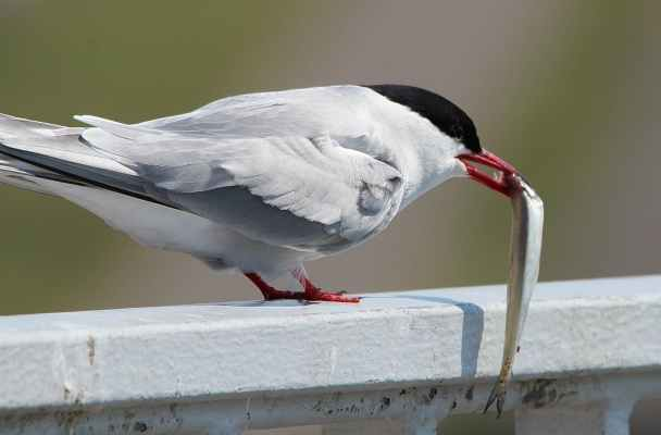 food bird animal animals