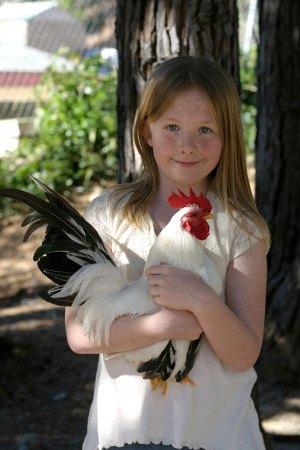 art-715-chicken