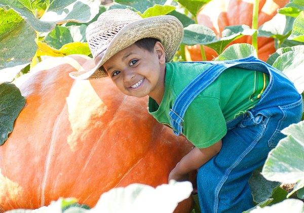 art-1015-harvest-happenings