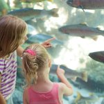 Love To Learn: Museums To Start The School Year