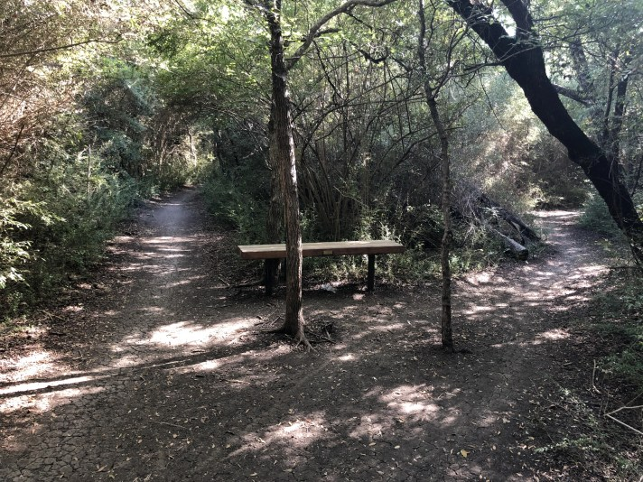 River Legacy: A bench in the woods