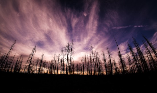 Dead trees at sunset at Bryce Canyon National Park, Utah, USA on northtosouth.us