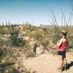 Saguaro National Park by Ian Norman