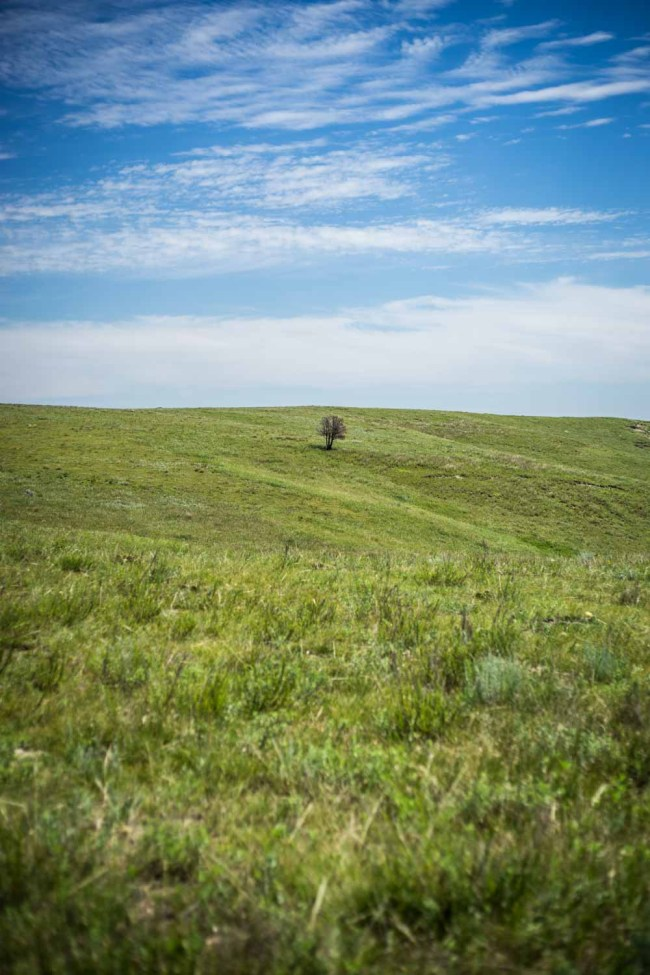 tree growing crooked in Theodore Roosevelt National Park