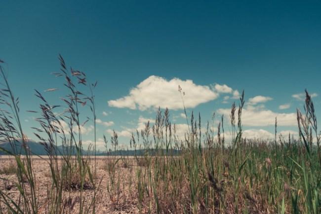 Idaho grass and sky