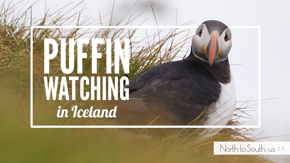 Puffin Watching on Iceland's South Coast (Dyrhólaey, Iceland)