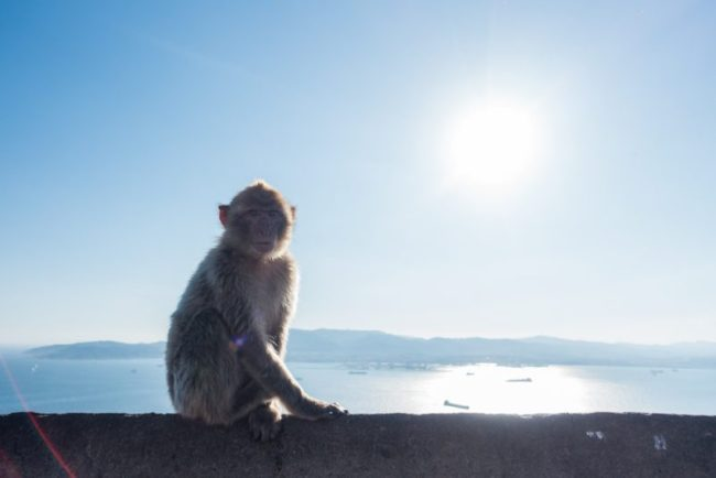 Hiking to the Top of the Rock of Gibraltar | barbary macaques of Gibraltar