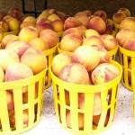 Georgia Peaches
