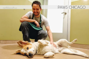 Volunteering at PAWS Chicago