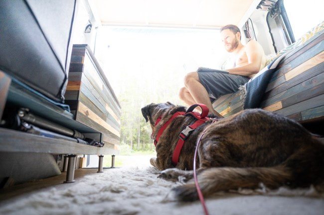 Tiger dog in Ford Transit campervan