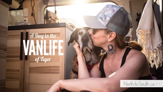 🐾 A Day in the VanLife of Tiger: The Importance of Routine 🐾