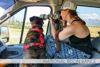 North to South's Year in Review 2019 | National Bison Range with Tiger