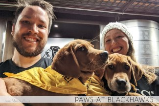 North to South's Year in Review 2019 | PAWS Chicago at Blackhawks