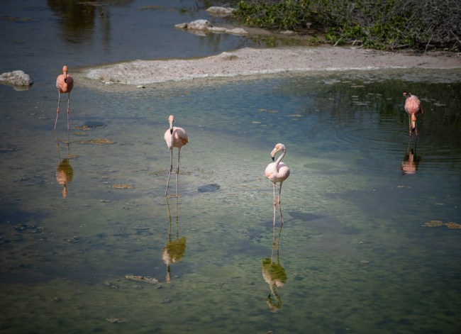 Best Camera Gear for the Galápagos Islands - Sony a7III + 100-400mm - Flamingo Lagoon, Isabela Island