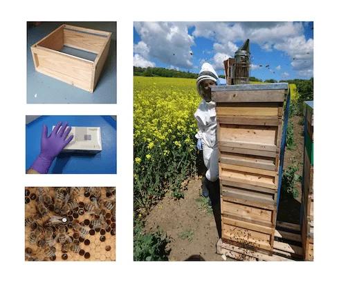 Full Beekeeping Starter Package