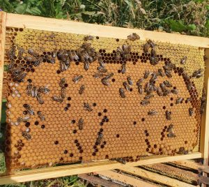 Nucleus Colonies For Sale   Bees For Sale
