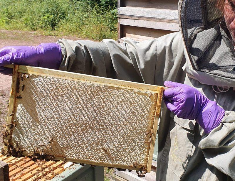 Cut Comb Honey Production Northumberland Honey Co