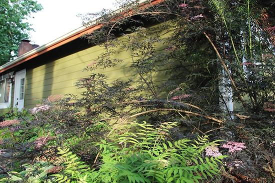 garden design kitsap county