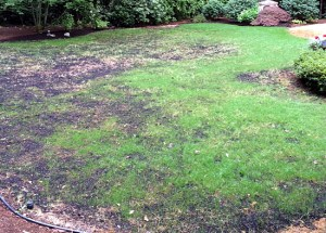 topdressing and overseeding lawn