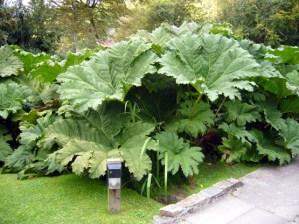 dinosaur food plant