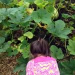 Bremerton landscaping