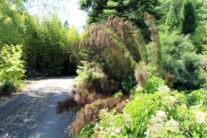 Windcliff garden