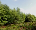 Heathland edge next to woodland