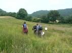 Looking for species rich grassland