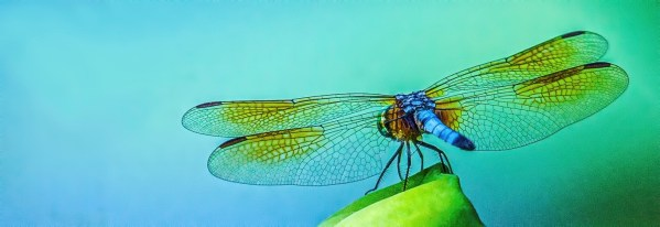 closeup photo of dragonfly with blue and green background titled Dog Days Of Summer by Charles Dana