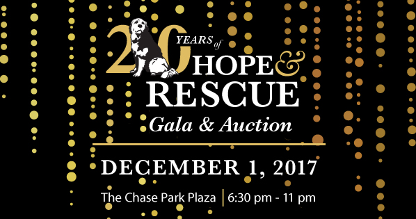 Stray Rescue - 20th annual Gala