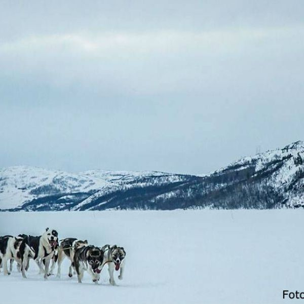 Dogsled in Kirkenes