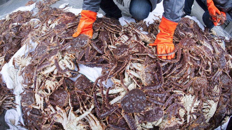 king crabs from Norway