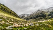 Sheep Mountain, Animal Husbandry