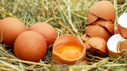 Chicken Eggs contamination