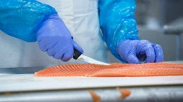 Salmon fillet seafood exports