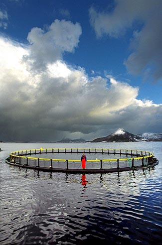 A fish farm along the coast of Norway. Photo: CreativeCommons