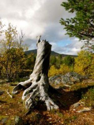 Geocaching in Hovden - Sprachreise nach Norwegen