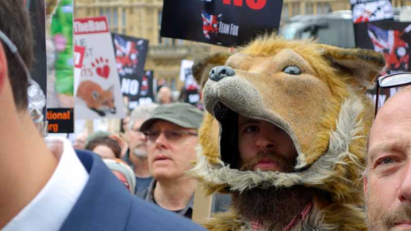 Realistic anti-fox hunting activist in London today